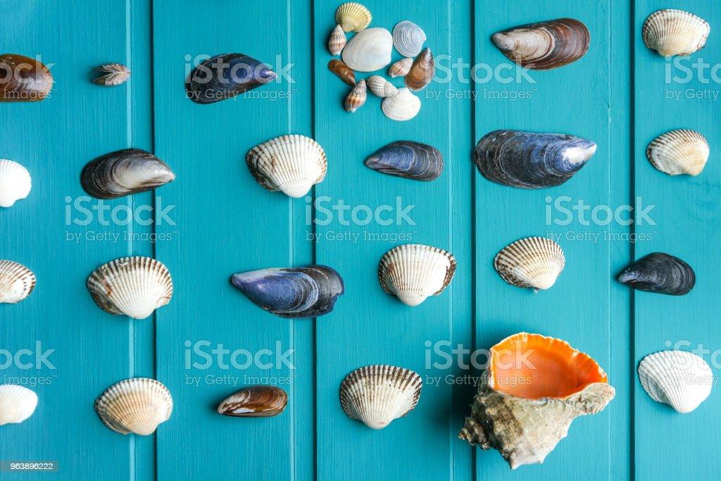 Seashells over blue background - Royalty-free Animal Shell Stock Photo
