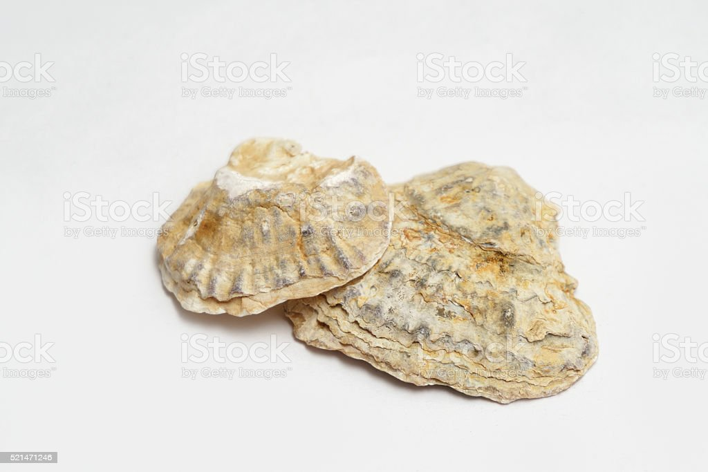 Seashells stock photo