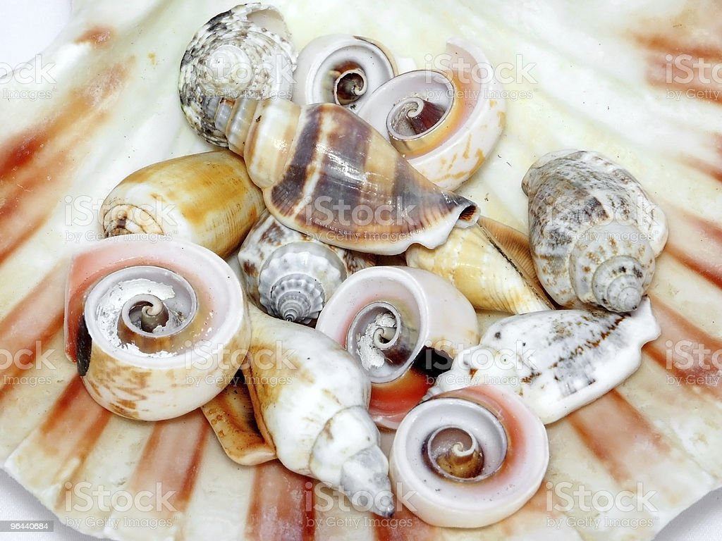 Seashells - Royalty-free Animal Stock Photo