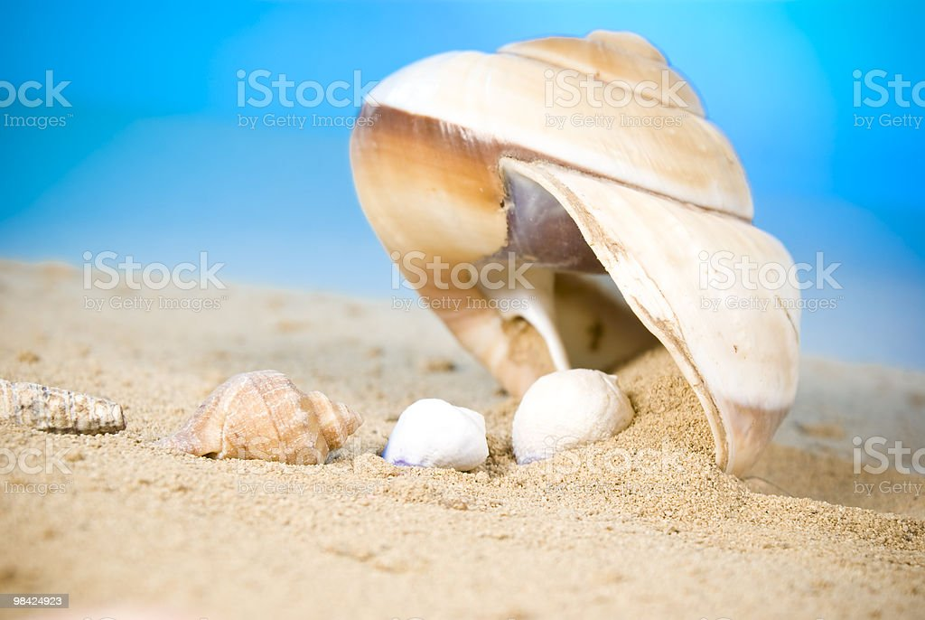 Conchiglie foto stock royalty-free