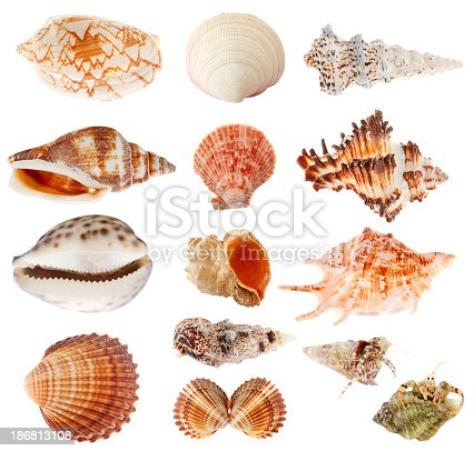 Collection of seashells isolated on white.