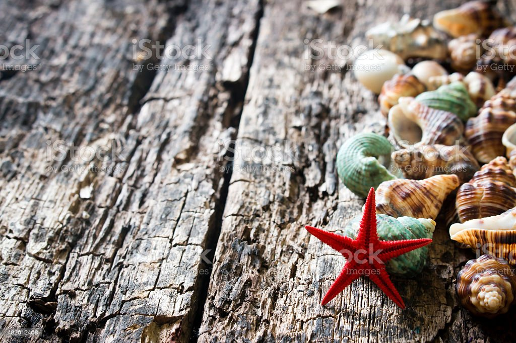 seashells, shellfish, starfish on wooden background  selective focus stock photo