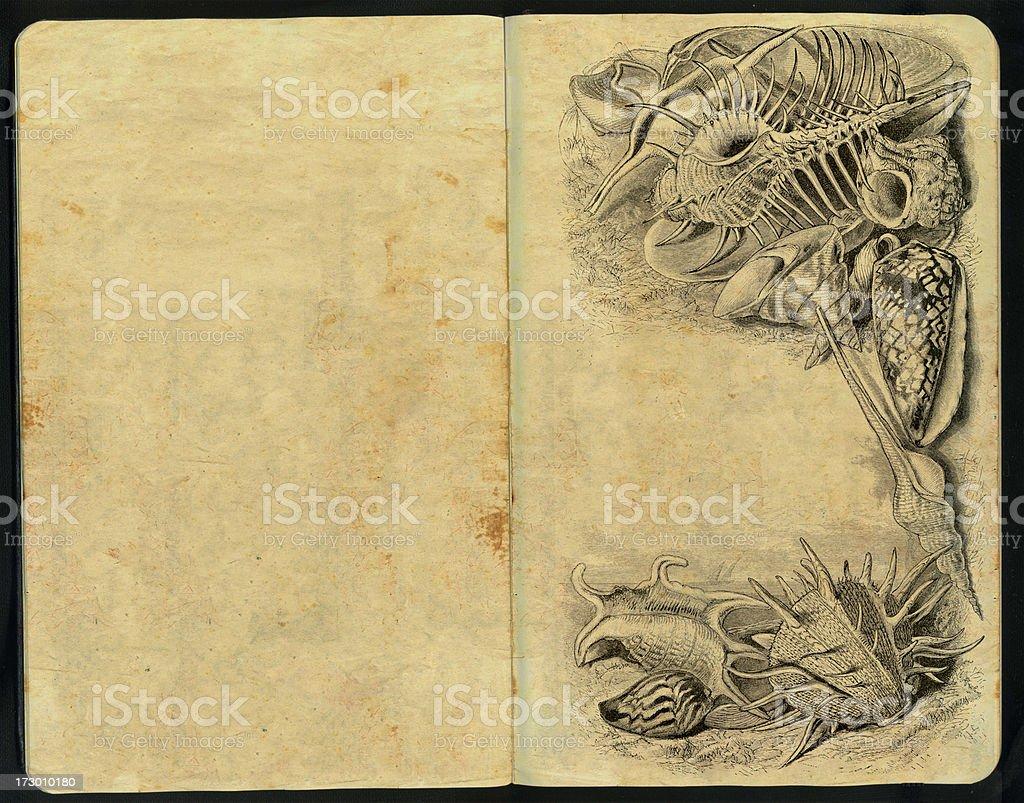 Sea-Shells Sketch Pad royalty-free stock photo