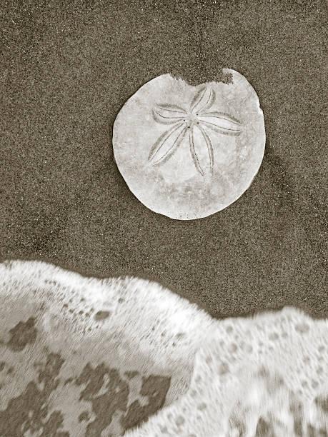 Seashore Discovery stock photo