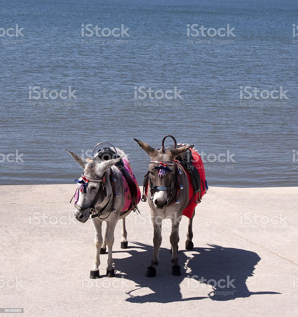 Seaside Donkeys royalty-free stock photo