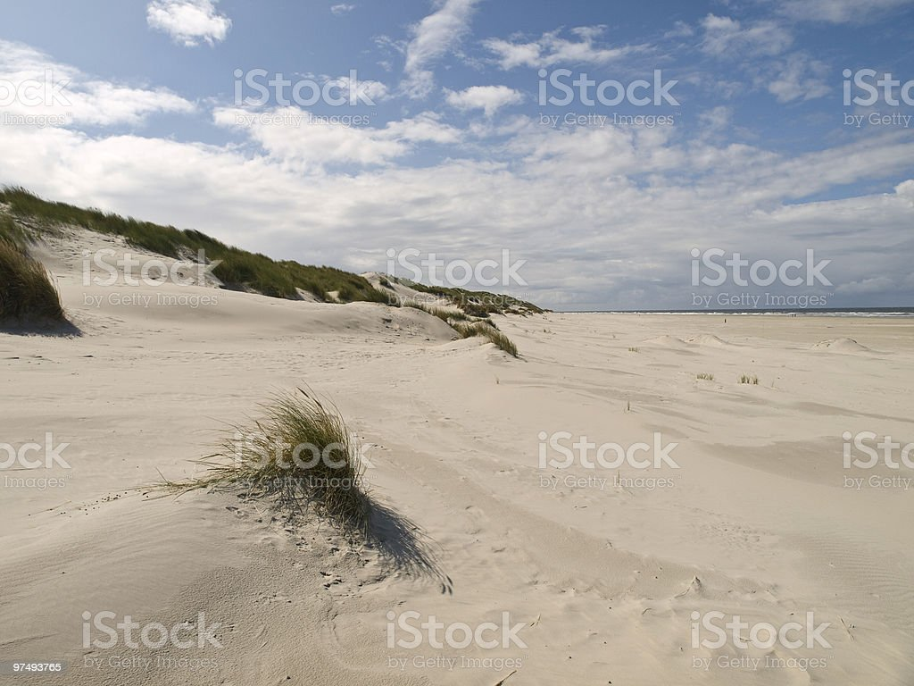 seaside grass royalty-free stock photo