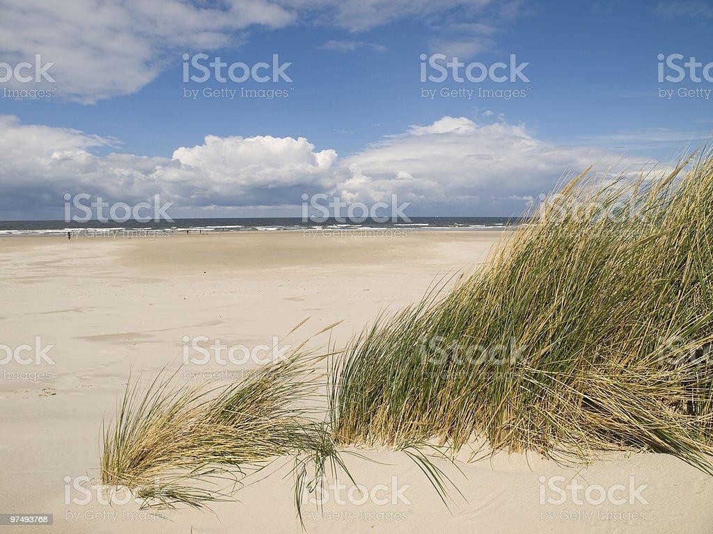 seaside grass royalty-free stock photo