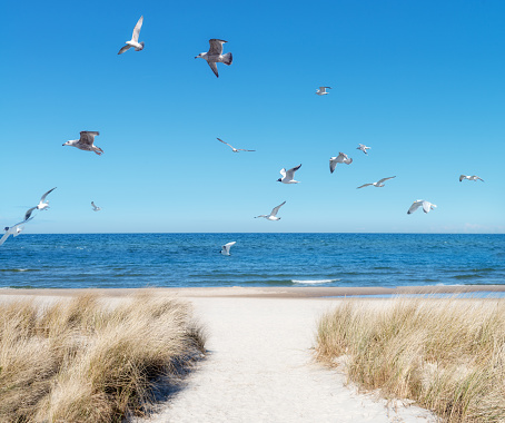 Seaside in Rugen island, Northern Germany