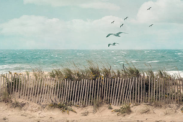 Seaside View of a beach on Cape Cod, Massachusetts, on a windy fall day with an old wooden fence, beach grass and ocean scenery. cape cod stock pictures, royalty-free photos & images