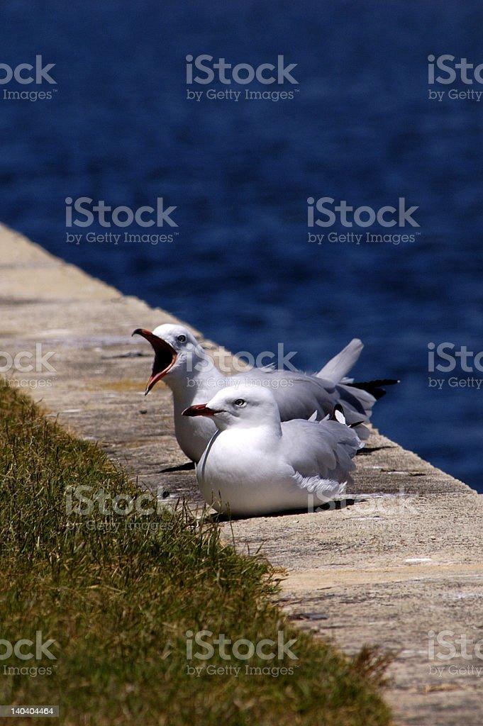 Seaside Seagulls stock photo