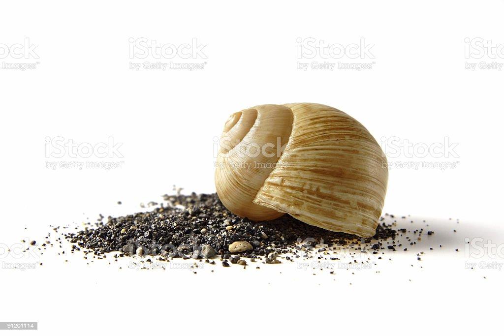 seasnail shell on black sand stock photo