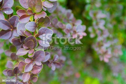948743278 istock photo Season of beautiful autumn leaves. Nature background. 863497690