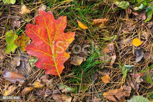 948743278 istock photo Season of beautiful autumn leaves. Nature background. 863497696