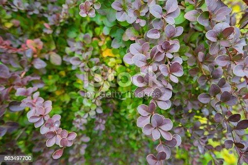 948743278 istock photo Season of beautiful autumn leaves. Nature background. 863497700