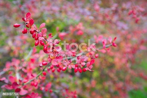 948743278 istock photo Season of beautiful autumn leaves. Nature background. 863497704