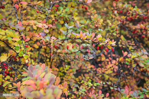 948743278 istock photo Season of beautiful autumn leaves. Nature background. 863497720