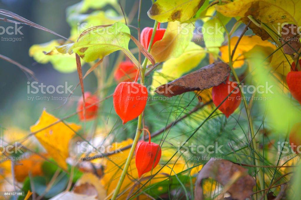 Season of beautiful fall . Nature background royalty-free stock photo