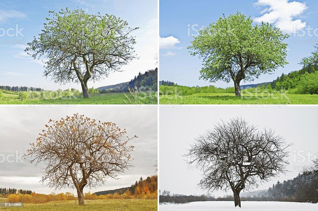 La saison - Photo