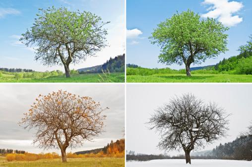 季節 - オレンジ色のストックフォトや画像を多数ご用意