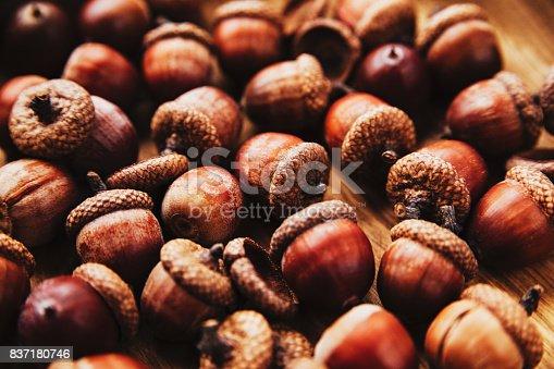 istock Seasonal autumn acorn background. 837180746