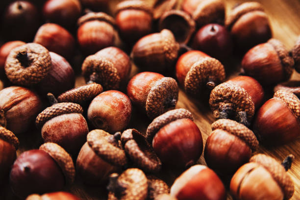 Seasonal autumn acorn background. stock photo
