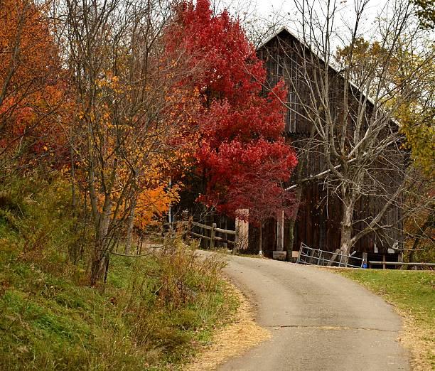 Seasonal Red, Orange, Green Tree Colors and Rustic Barn stock photo