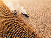 Aerial view of combine harvesting ripe wheat