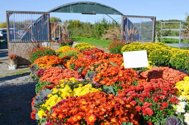 4 Seasons - Flowers for Sale stock photo
