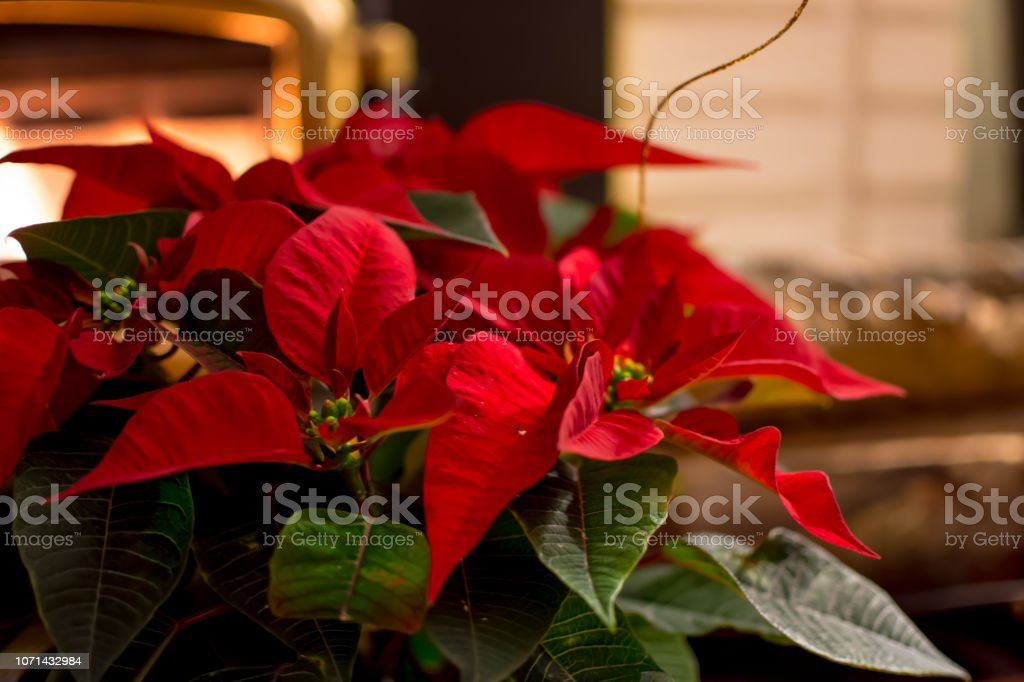 Seasons greetings Christmas holiday background cozy home witht fireplace and room for copy stock photo