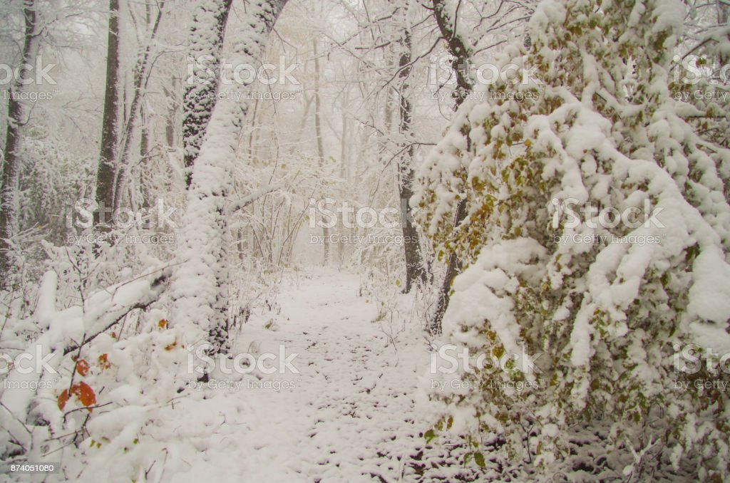 4 Seasons. On the first snow. A footpath in the autumn forest. Nature and travel. Russia, Adygea, Caucasus Mountains stock photo