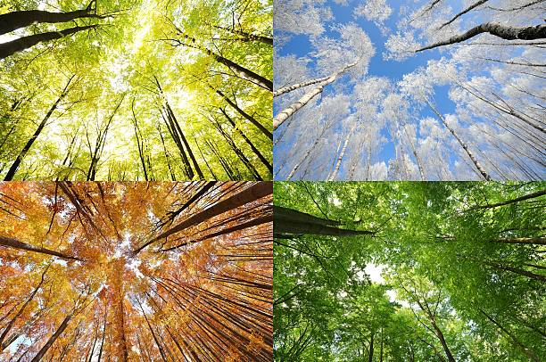 4 seasons 4 seasons in the forest four seasons stock pictures, royalty-free photos & images