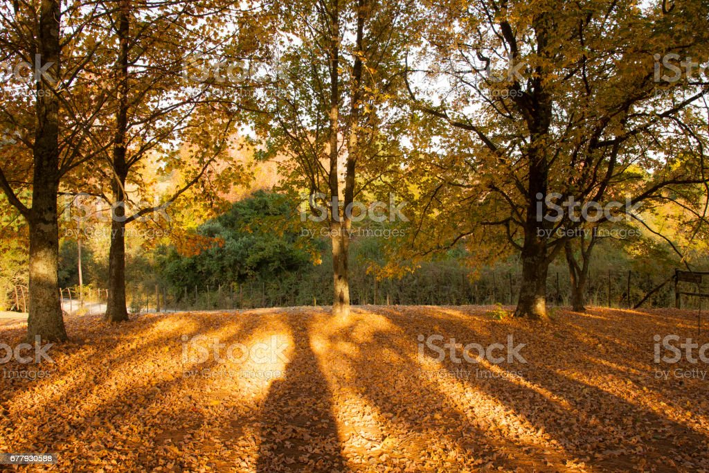 4 Seasons royalty-free stock photo