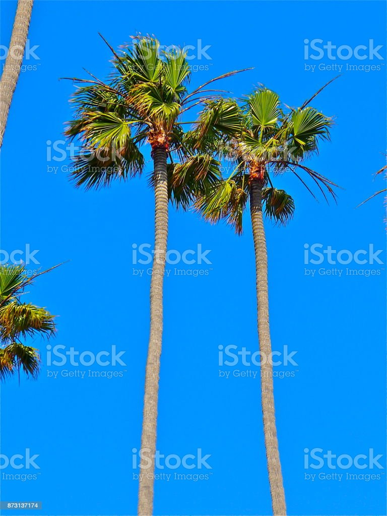 4 Seasons stock photo
