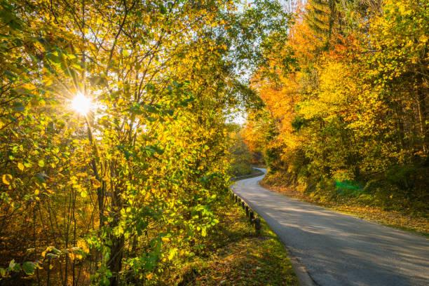4 saisons - rayonnement solaire à travers des arbres de l'automne le long de la route - Photo