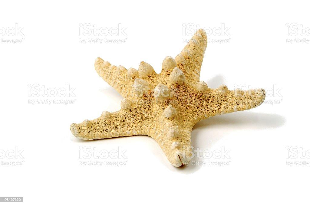 Sea-star isolated royalty-free stock photo