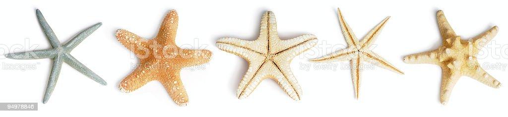 seastars royalty-free stock photo
