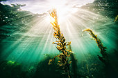 Rays of light from the sun shining through the ocean with sea grass in the foreground