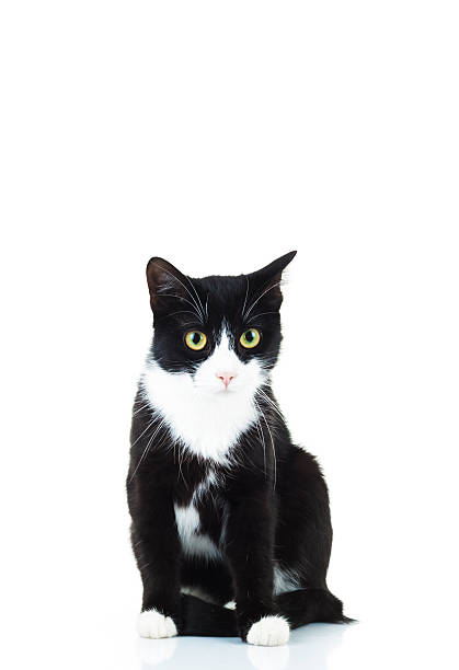 Best Black And White Cat Stock Photos, Pictures & Royalty ...