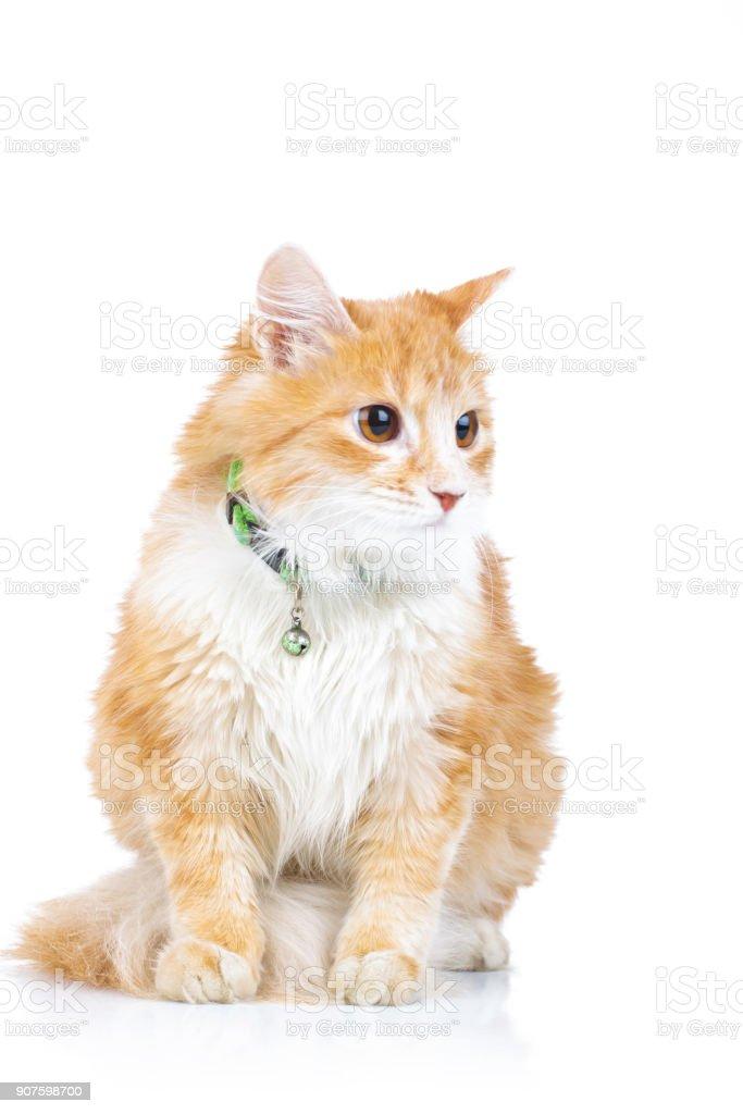 seated orange cat looks to side stock photo