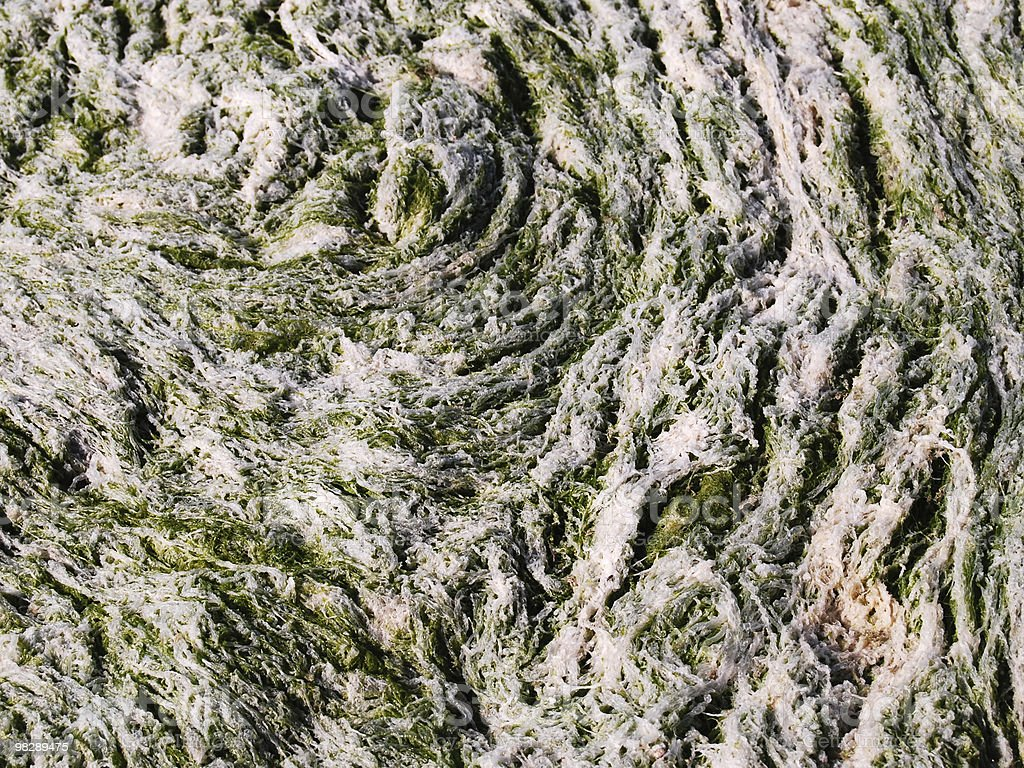 Seaweed Abstract royalty-free stock photo