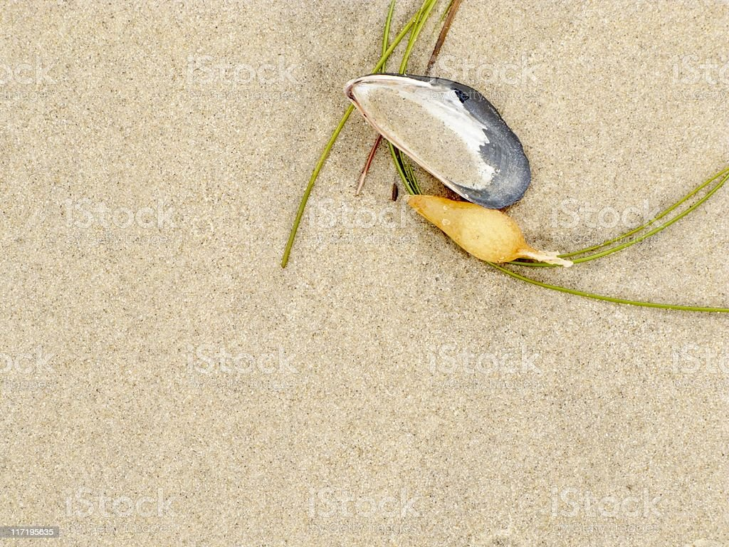 Seaweed and Shell In Sand, Beach Rocks, Abstract,Background, Copyspace royalty-free stock photo
