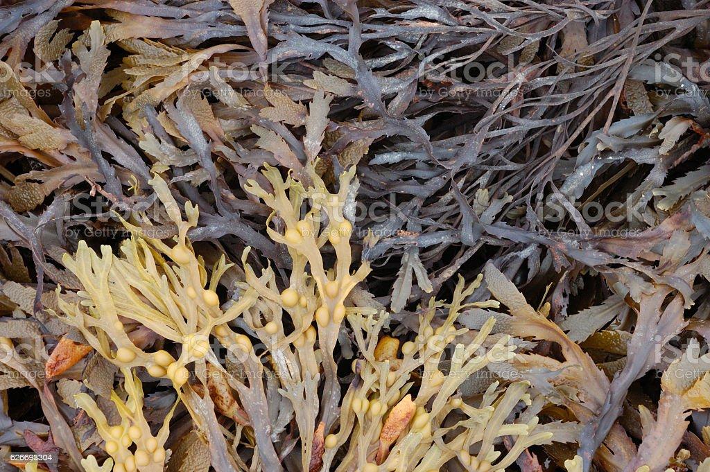 Seaweed Background stock photo