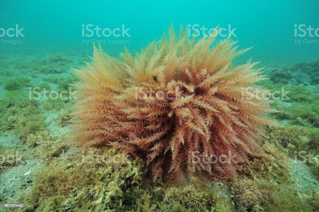 Bush de algas de fondo plano - foto de stock
