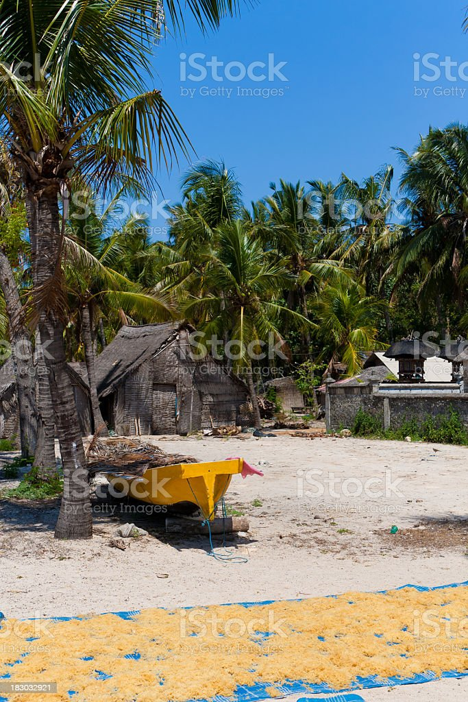 Seaweed culture, Bali royalty-free stock photo