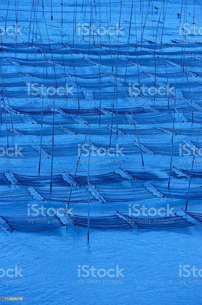Seaweed farm royalty-free stock photo