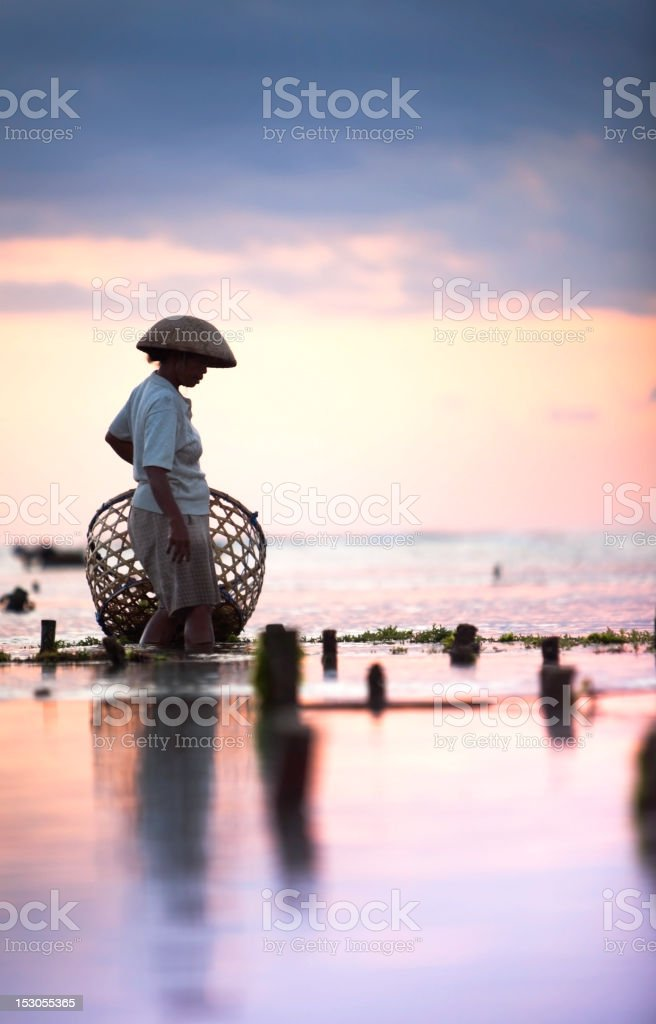 Seaweed farmer walking with basket through the water at dusk stock photo