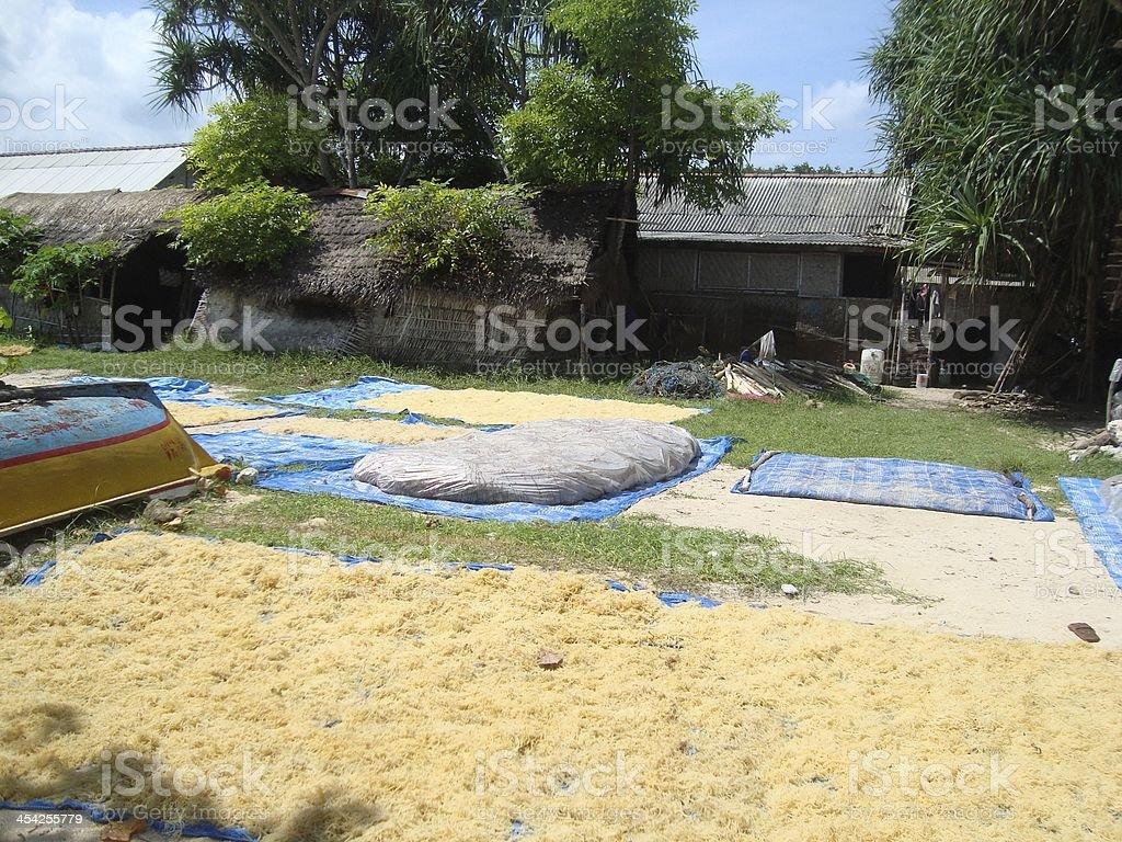 seaweed farming, Nusa Lembongan - Indonesia royalty-free stock photo
