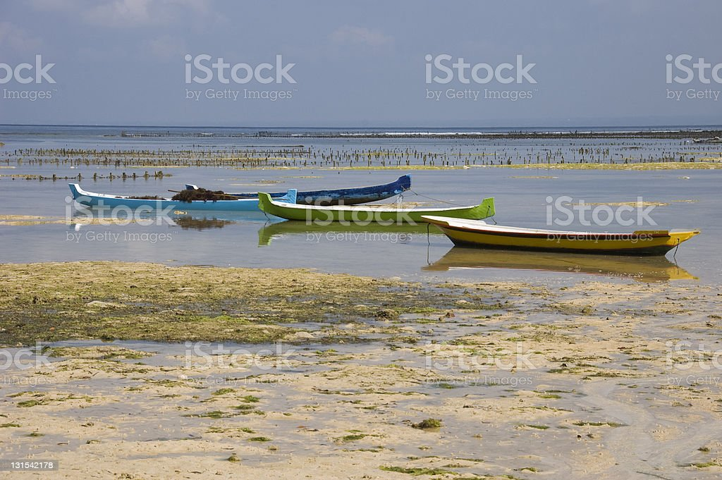 Seaweed farming on the island of Nusa Lembogan royalty-free stock photo