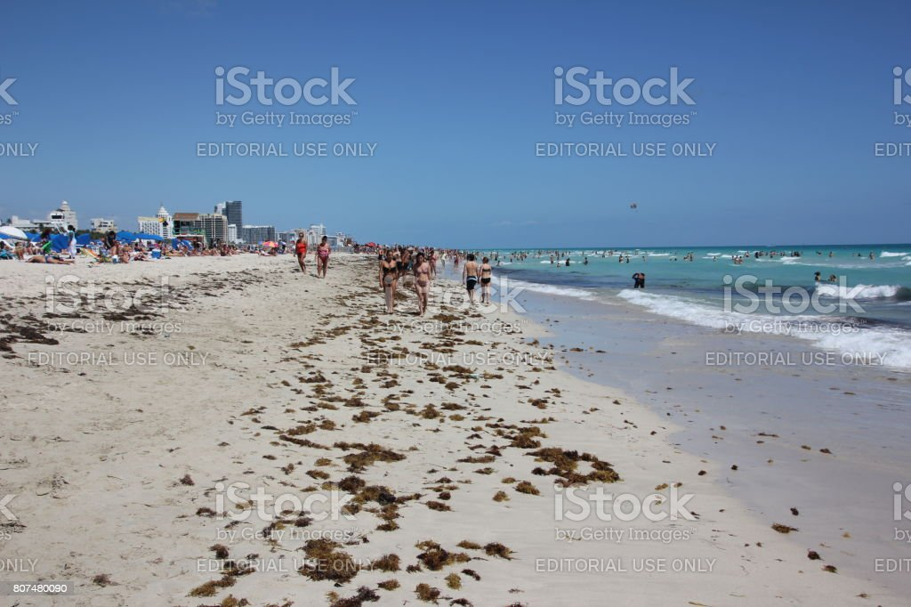 Seaweed In South Beach Miami Beach Florida Usa Stock Photo