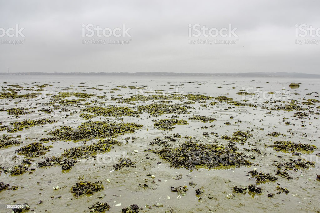 Seaweed on a shore royalty-free stock photo